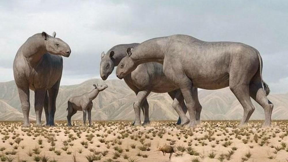 Çin'de 4 fil ağırlığında ve 7 metre uzunluğunda yeni bir gergedan türü keşfedildi - 3