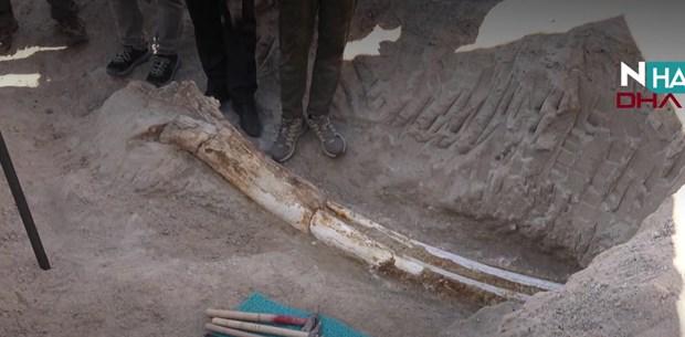N Hayat... Kayseri'de 10 milyon yıllık fil fosili bulundu