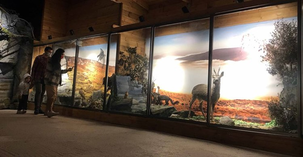 Nadir tabiat varlıklarını gelecek nesillere taşıyan müze: Yenice Doğa ve Hayvan Müzesi - 5