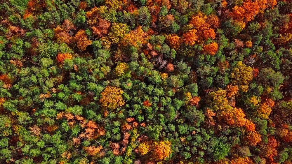 Araştırma: Her üç ağaçtan biri yok olma tehlikesiyle karşı karşıya, hangi ağaçlar tehlikede? - 5