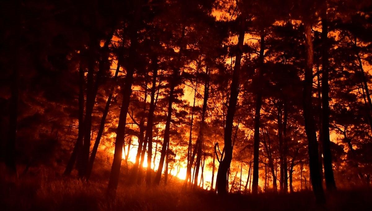 Hatay ve Mersin'de orman yangını