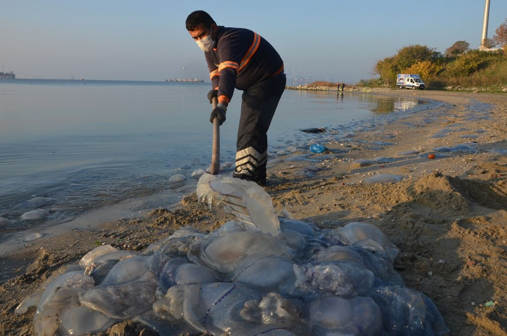 İstanbul'da korkutan dev denizanaları: Her biri en az bir kilo ağırlığında - 20