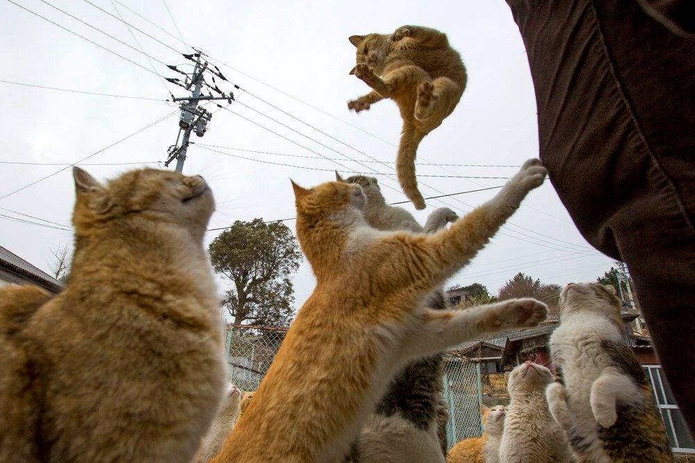 Japonya'daki kedi adası: Aoshima - 12
