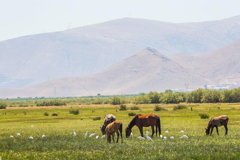 Kayseri'de bozkırın ortasındaki cennet vaha: Sultan Sazlığı - 18