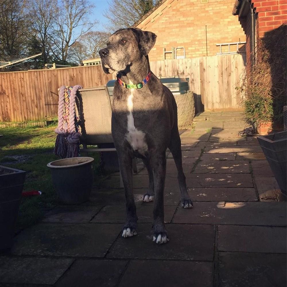 Dünyanın en uzun köpeği Freddy hayatını kaybetti - 24