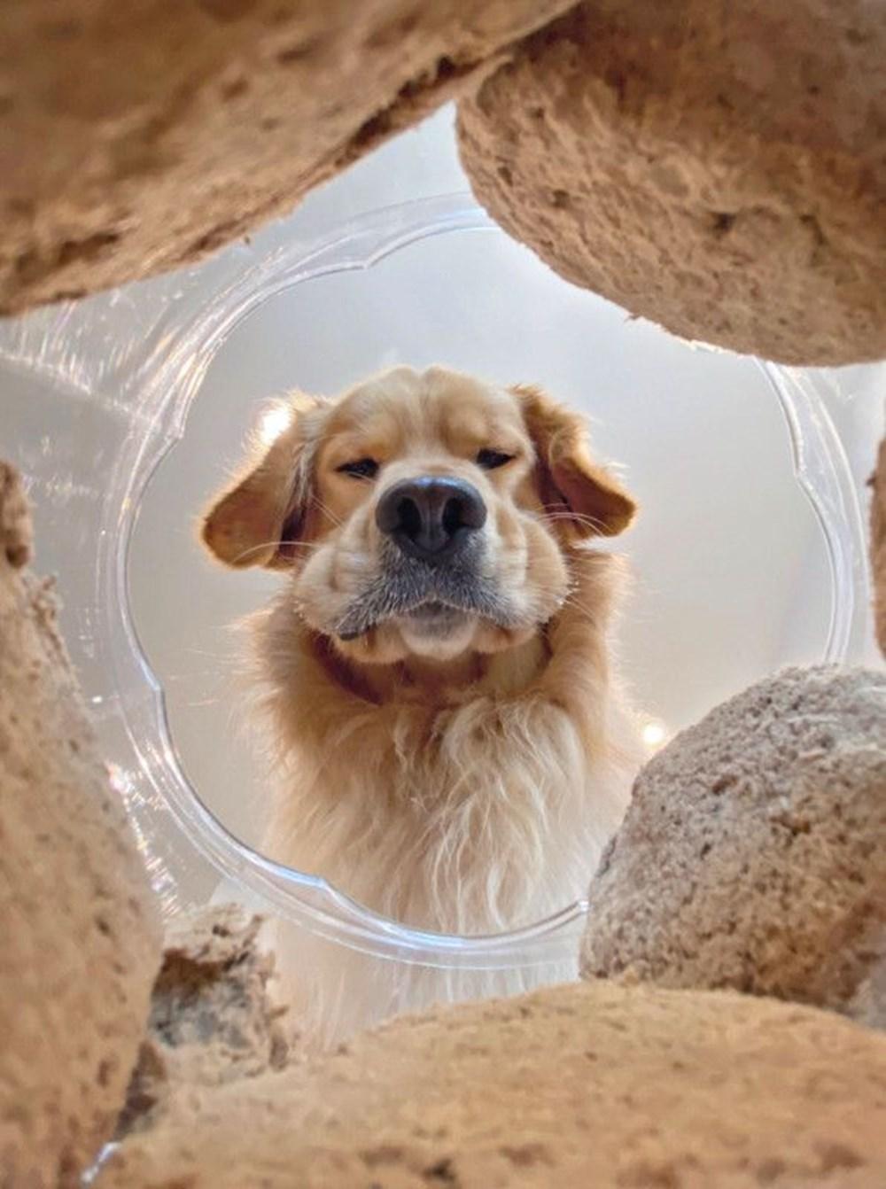 2020 Mars Petcare Komik Hayvan Fotoğrafları Yarışması'nın finalistleri - 12