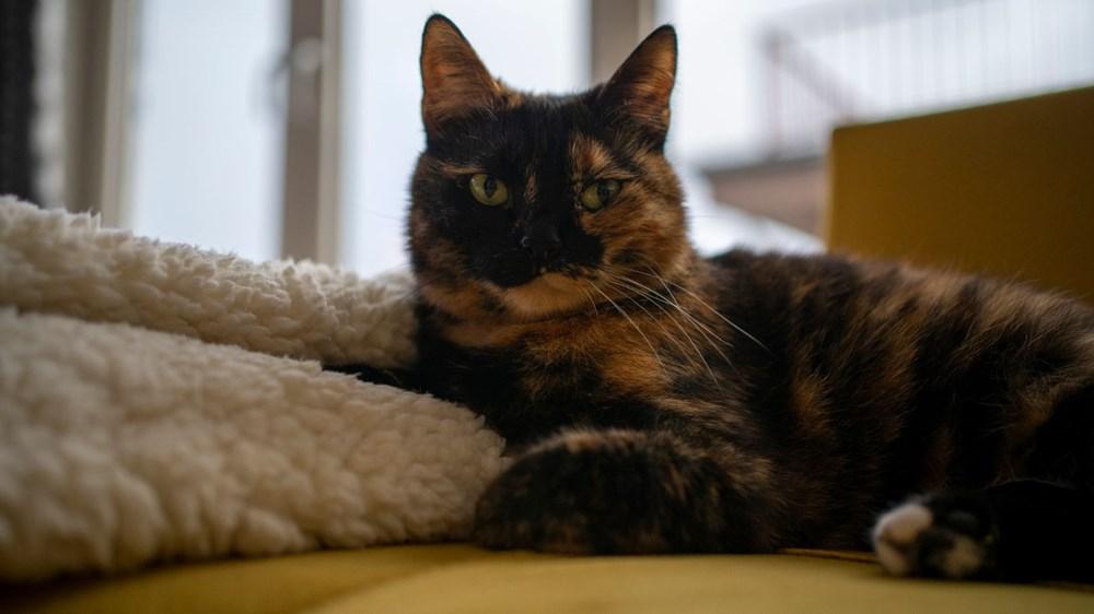 Avrupa kedi sahipliği oranı belli oldu: Türkiye'nin yüzde 19'u kedi sahibi - 2