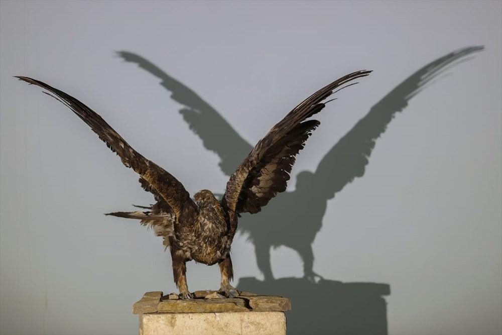 Van'da yaban hayvanları tahnit sanatıyla müzede tanıtılacak - 37