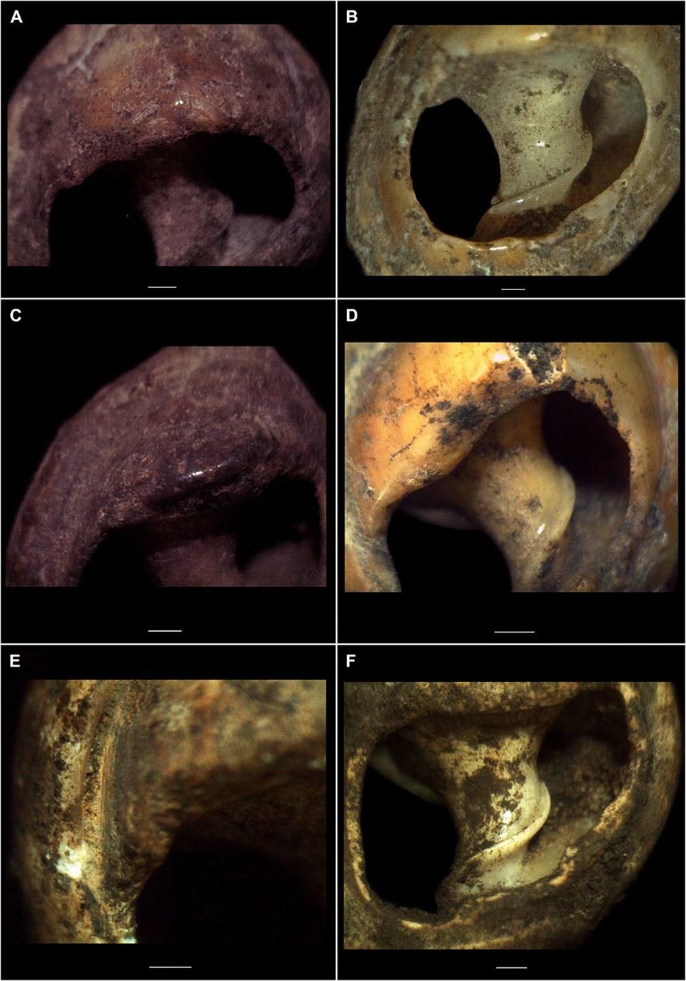 Dünyanın en eski mücevheri bulundu: 150 bin yıllık - 3