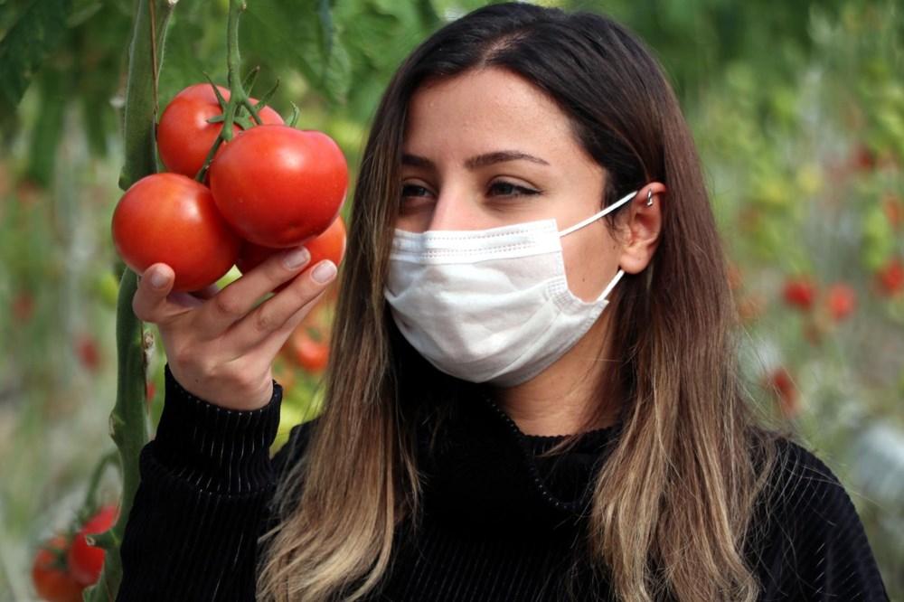 Hava sıcaklığının eksi 40'a kadar düştüğü Çaldıran'da, serada domates üretimi - 7