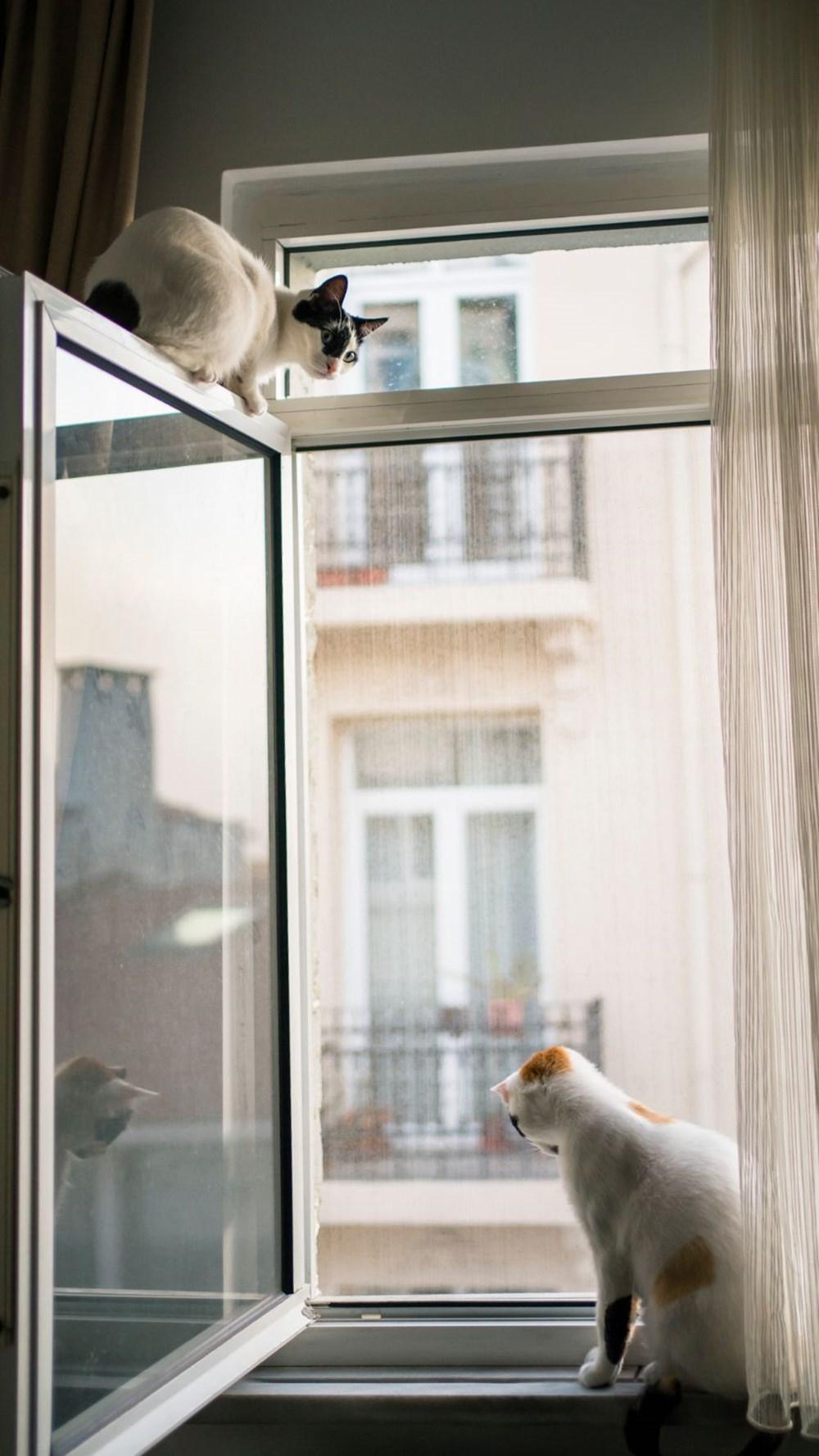 Avrupa kedi sahipliği oranı belli oldu: Türkiye'nin yüzde 19'u kedi sahibi - 3