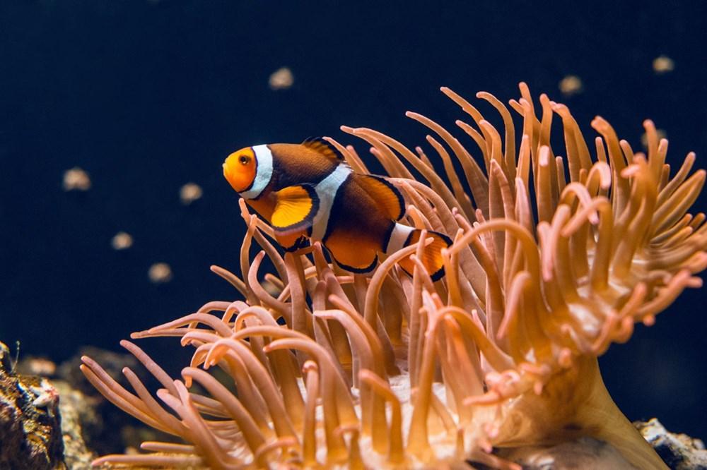 Küresel ısınma, deniz yaşamının kaynağı olan mercan resiflerini yok ediyor - 7