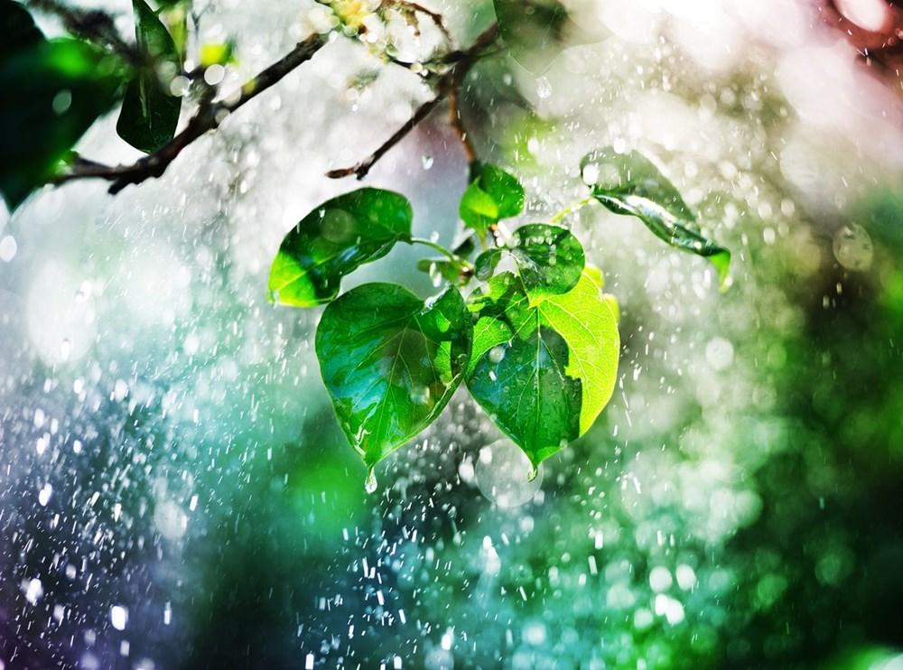 Kuraklık tehlikesi kapıda: Ağaç sayısını yüzde 20 artırmak, yağışlarda yüksek bir artış sağlayabilir - 7