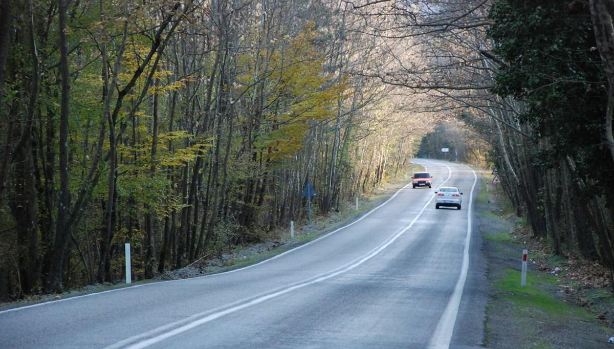 9 kilometrelik 'ağaç tünel yol' görsel şölen sunuyor