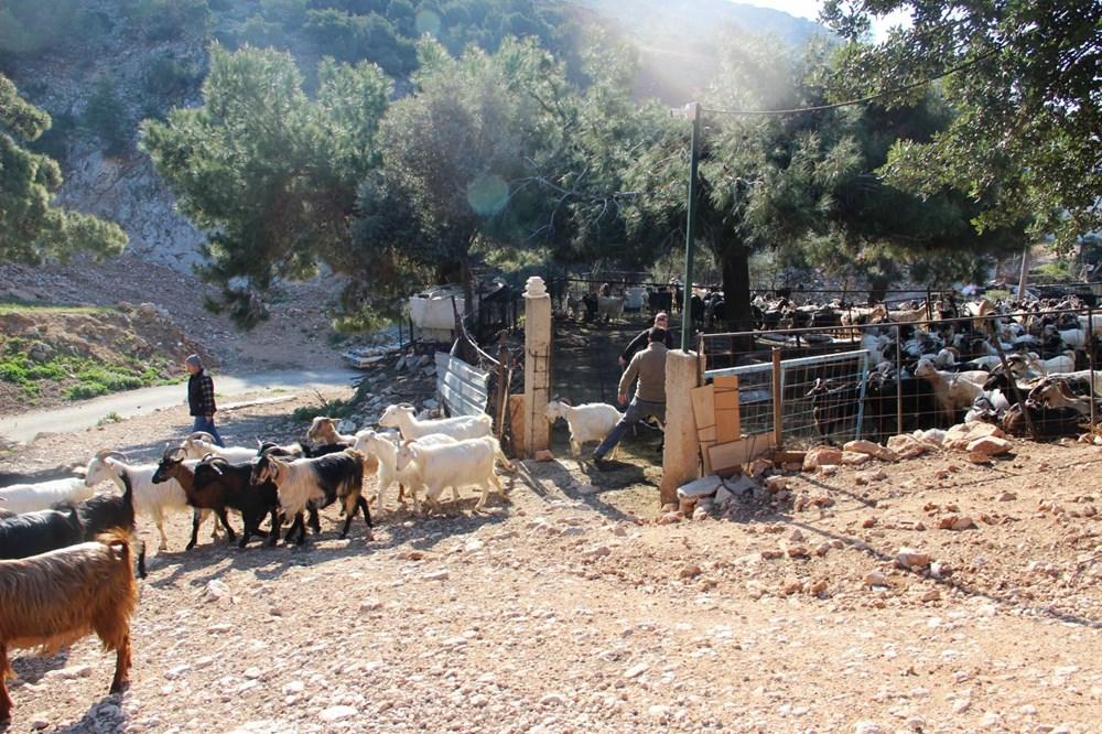 Bodrum'un drone'lu çobanı: Adım adım izliyor - 5