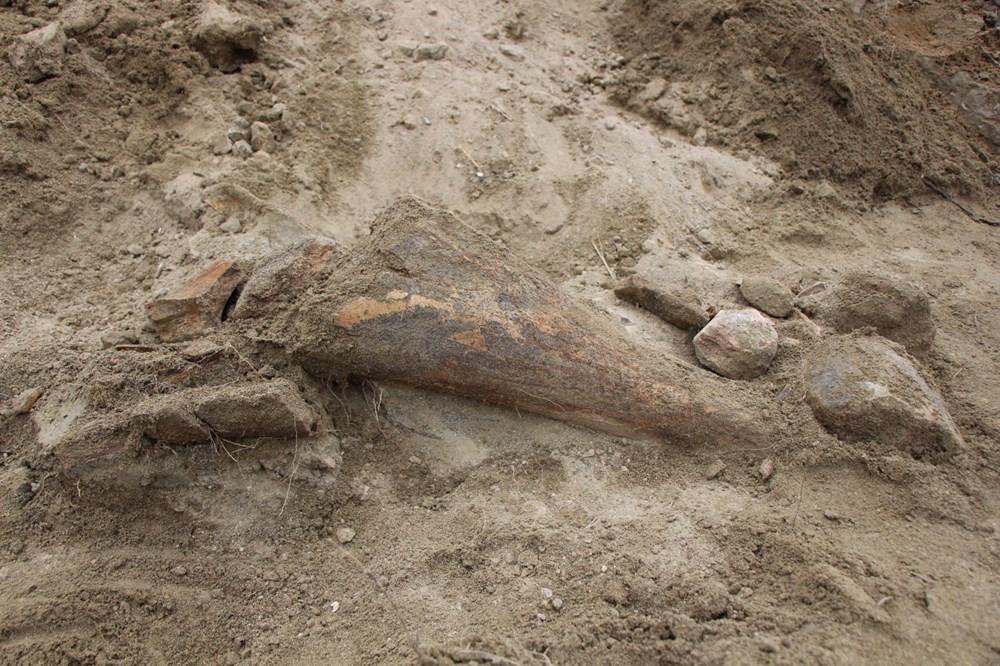 Amasya'da bulunan cisimler için mamut fosili heyecanı - 2