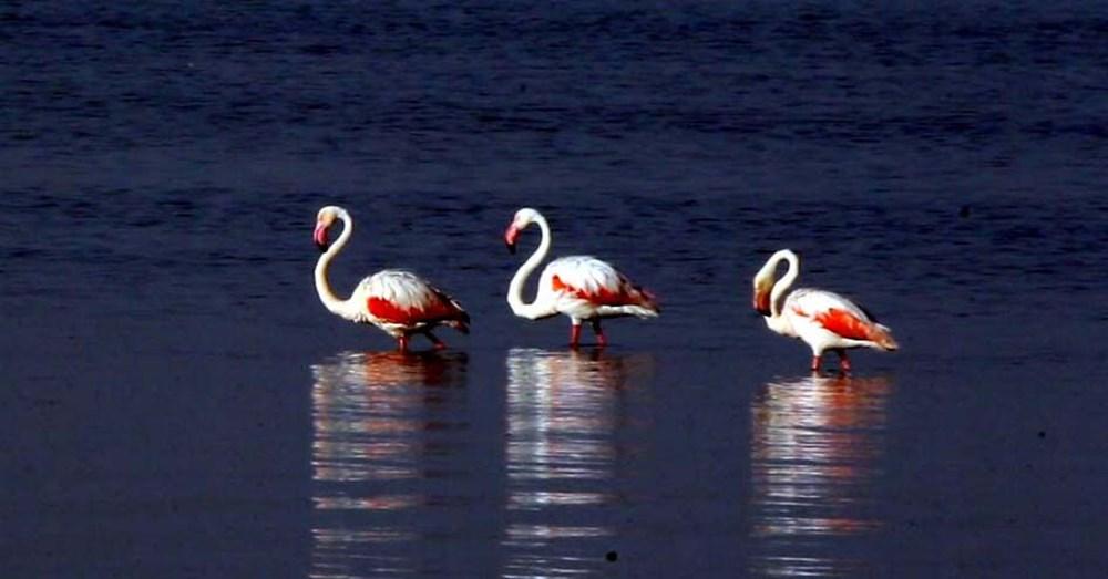 Van Gölü'nde flamingo şöleni - 6