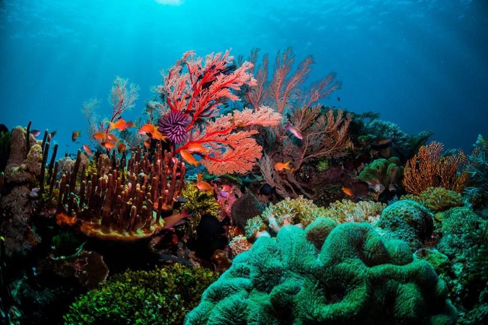 Büyük Set Resifi iklim değişikliği nedeniyle 2025'te yok olmaya başlayacak - 4