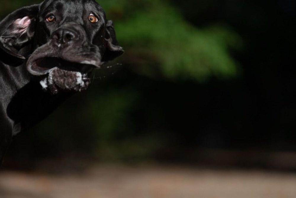 2020 Mars Petcare Komik Hayvan Fotoğrafları Yarışması'nın finalistleri - 10