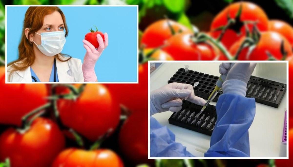 Özbekistan'dan corona virüse karşı domates aşısı