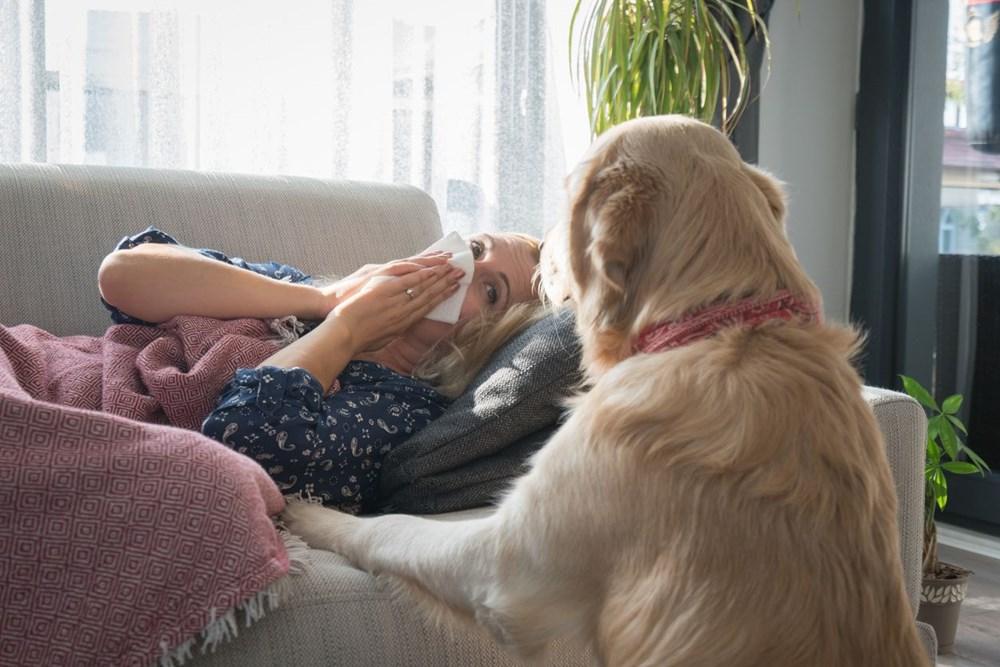 Pandemide sahiplenilen her beş köpekten biri terk edilme riskiyle karşı karşıya - 8
