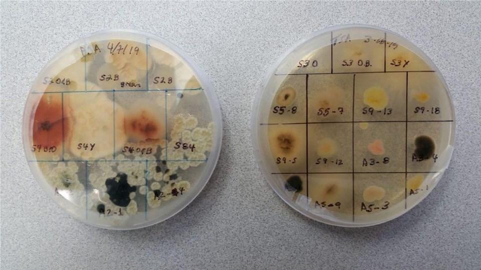 Bilim insanları tarafından dumanda bulunan mikrop örnekleri.