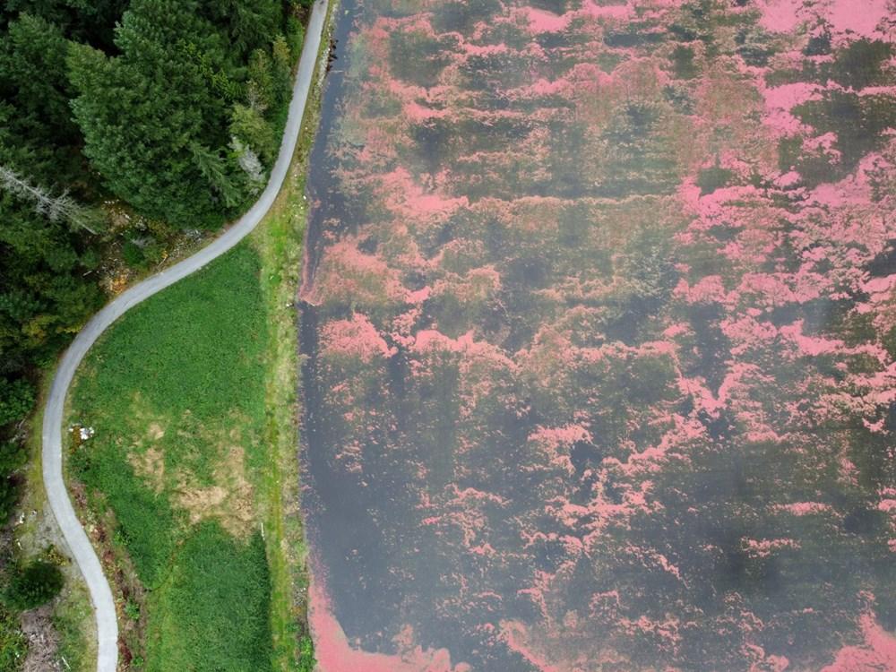 Kanada'da kızılcık hasadı - 11