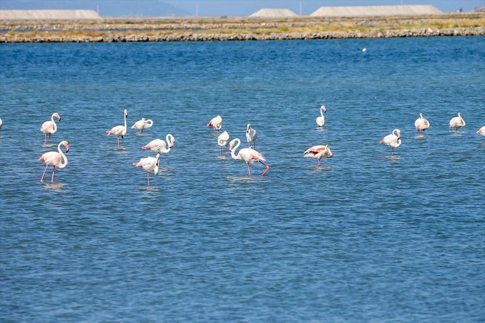 İzmir Kuş Cenneti'nde 18 bini aşkın yavru flamingo kreşte uçma hazırlığı yapıyor - 17