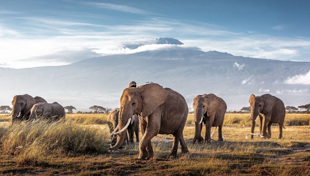 Afrika'nın en büyük doğal alanlarından Amboseli Milli Parkı'nda nesli tükenme tehlikesinde olan fillere isim verilecek