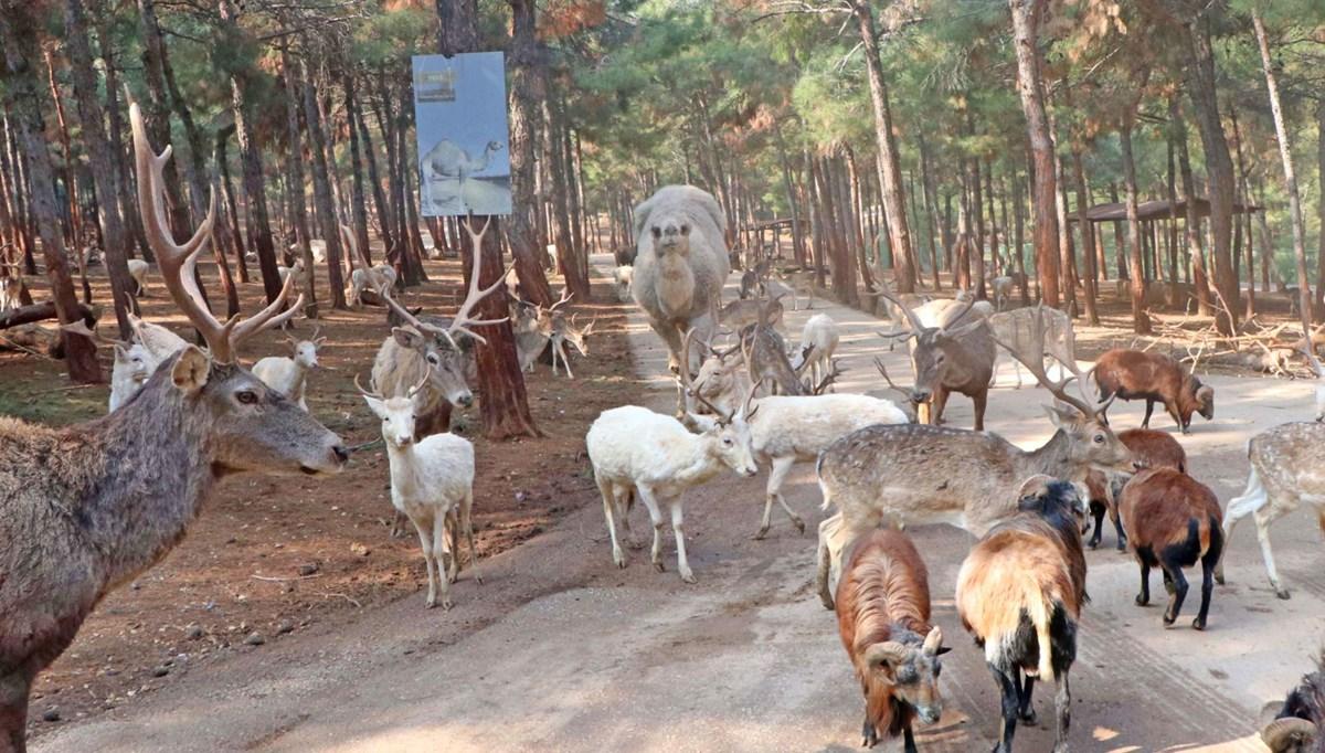 Türkiye'de ilk ve tek! Afrika'ya gitmeye gerek yok (Gaziantep Safari Parkı)