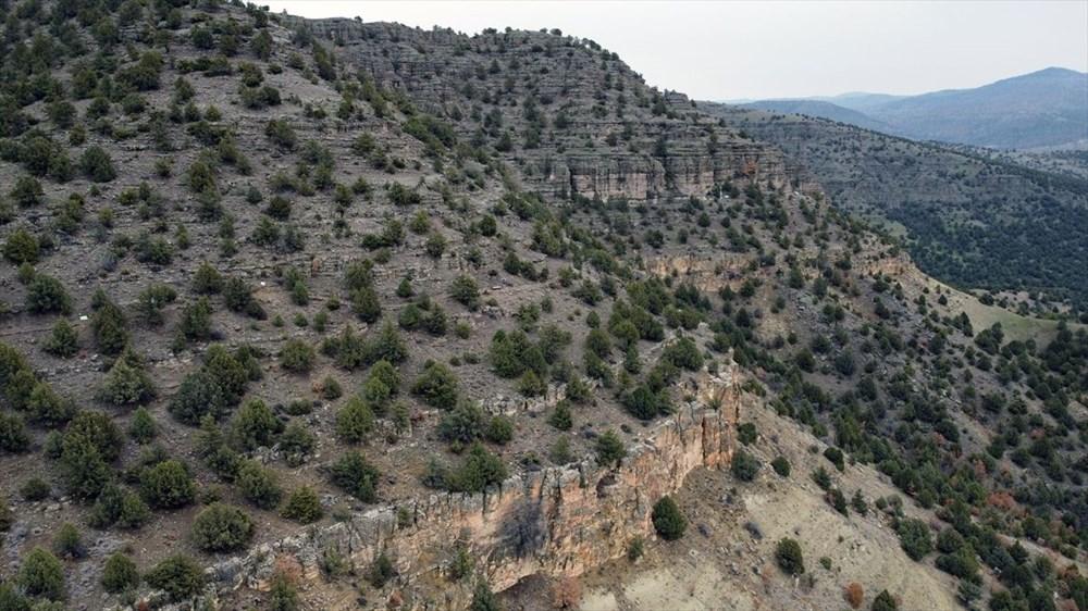 Türkiye'nin 'ilk' fosil ormanı UNESCO yolunda - 6