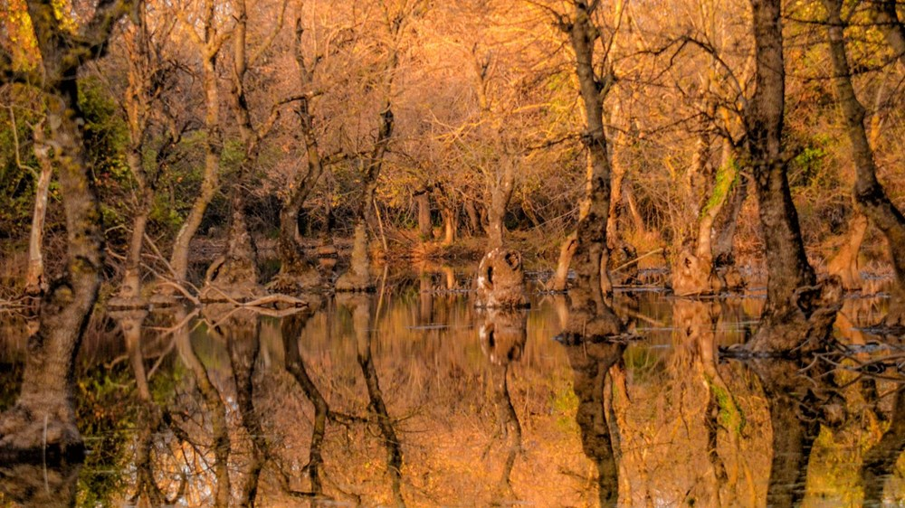 Yaban hayatı, sonbahar renklerinde görüntülendi - 3