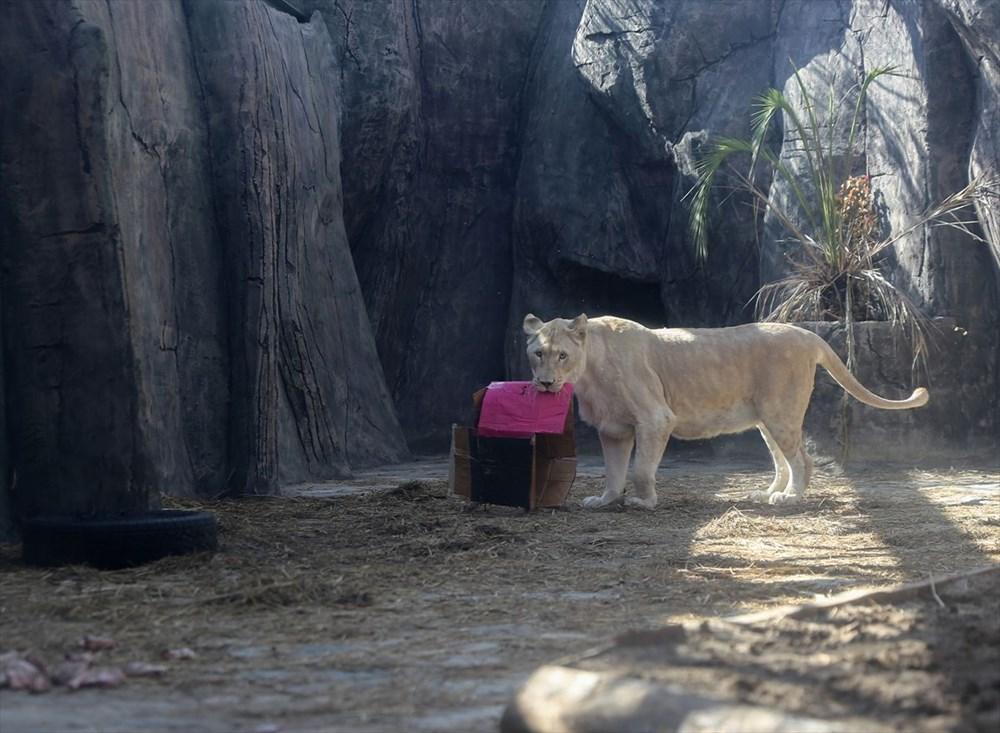 Türkiye'nin yavru aslan ve kaplanları Afrika yolcusu - 5