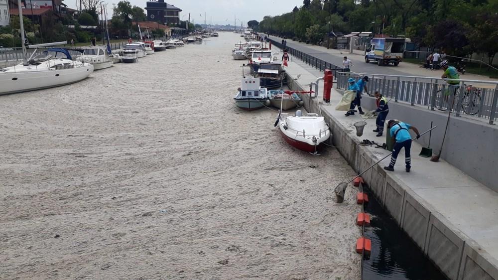 İstanbul'un sahilleri müsilajla doldu: 95 yıldır böyle bir şey görmedim - 8