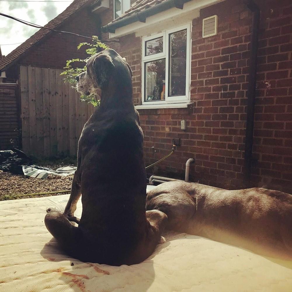 Dünyanın en uzun köpeği Freddy hayatını kaybetti - 32