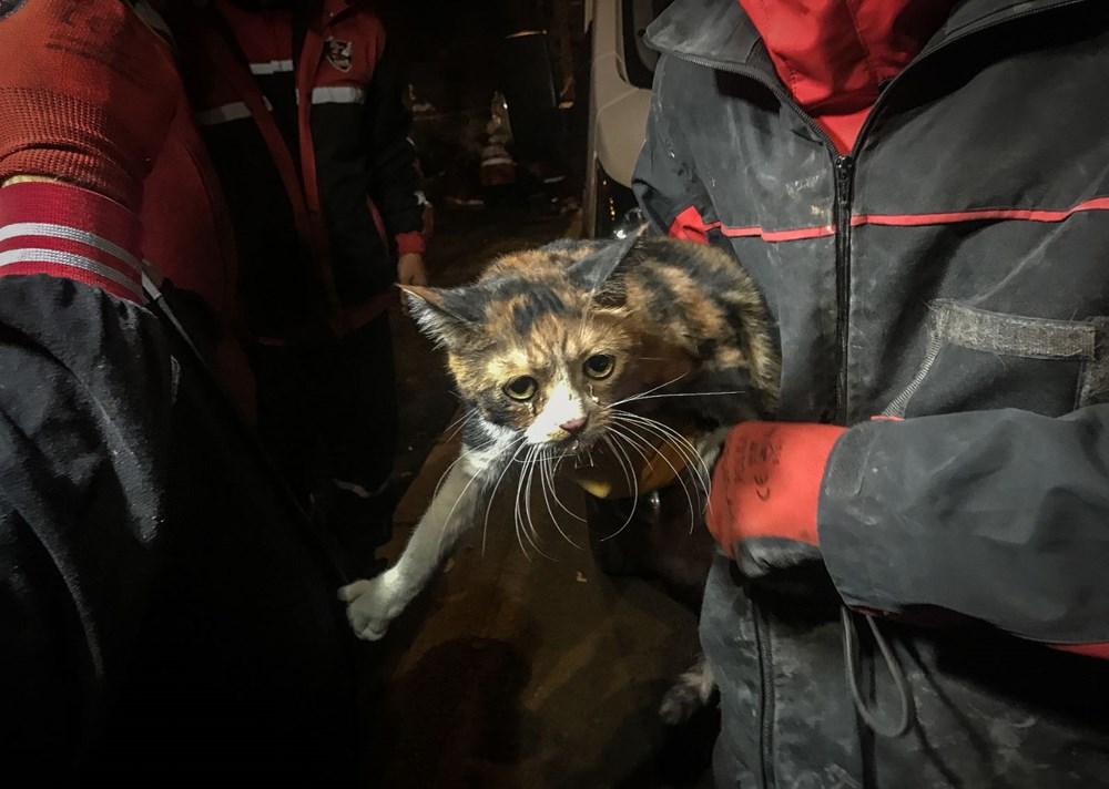 İzmir'de enkazda K-9 köpeği kediyi kurtardı - 4