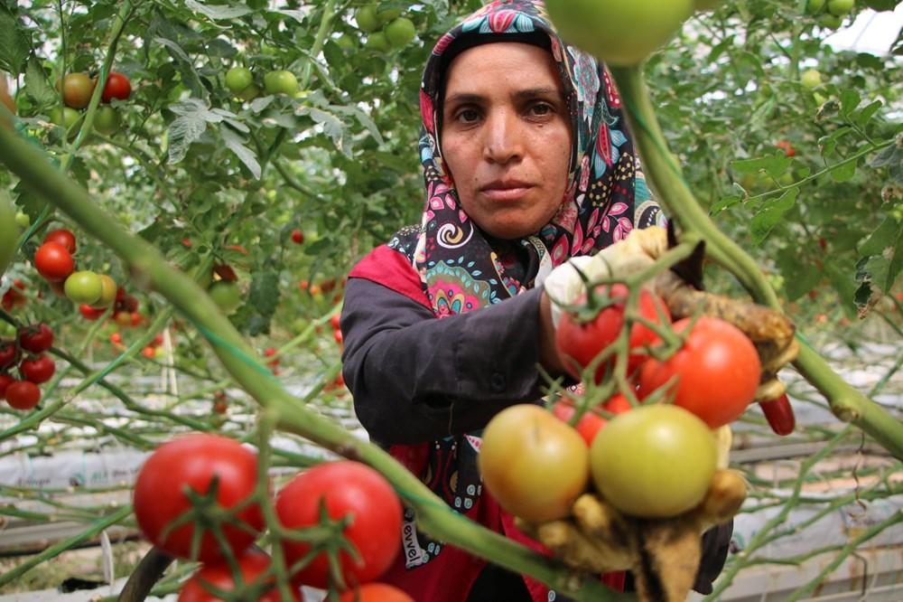 Elazığ'da topraksız tarım, kadınlara iş kapısı oldu - 8