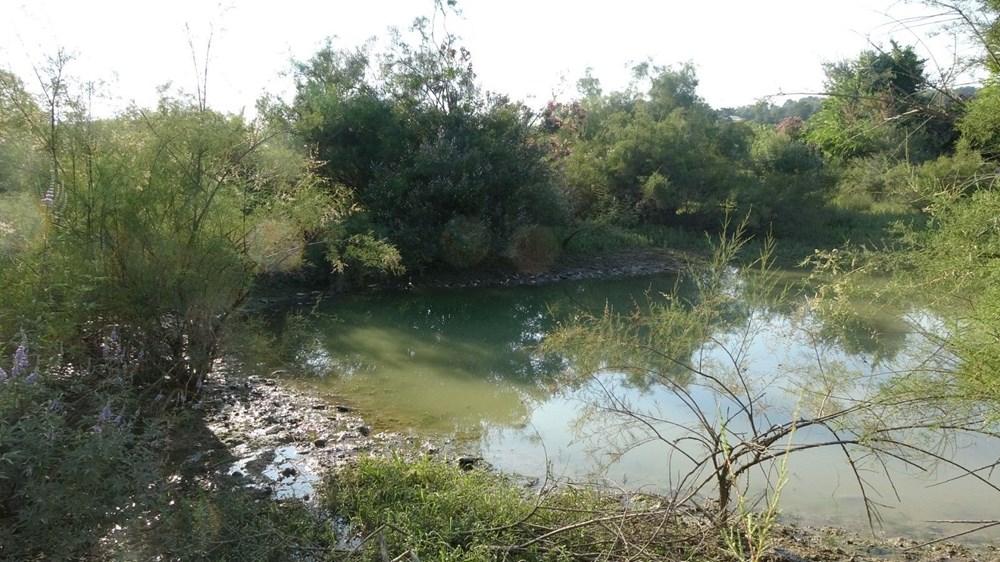 Manavgat'ta balık ölümleri - 6