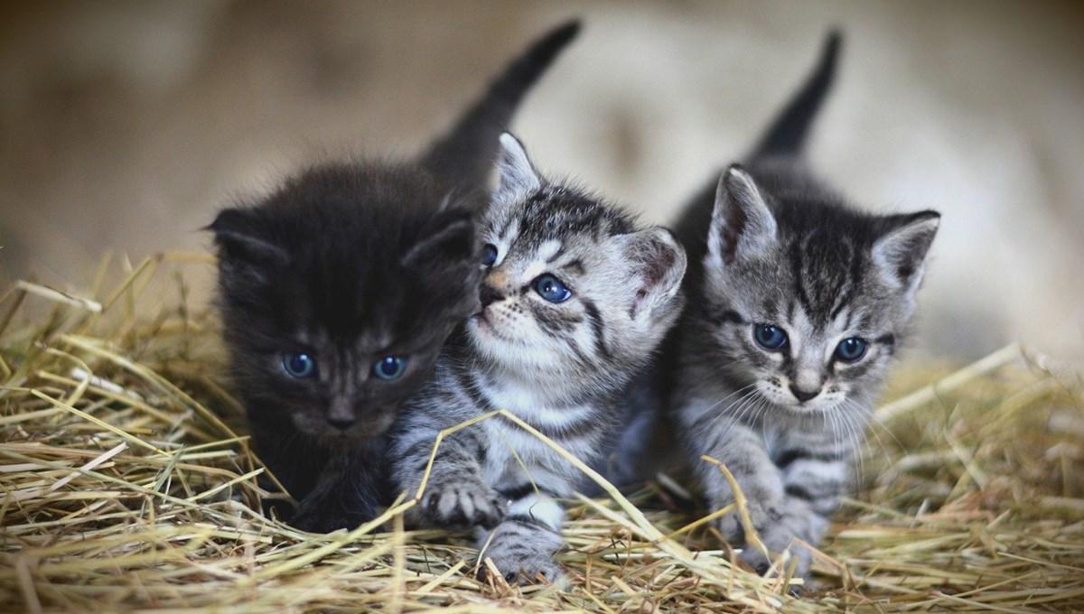 Tayvan'da 154 kedinin uyutulmasına hayvanseverlerden öfke