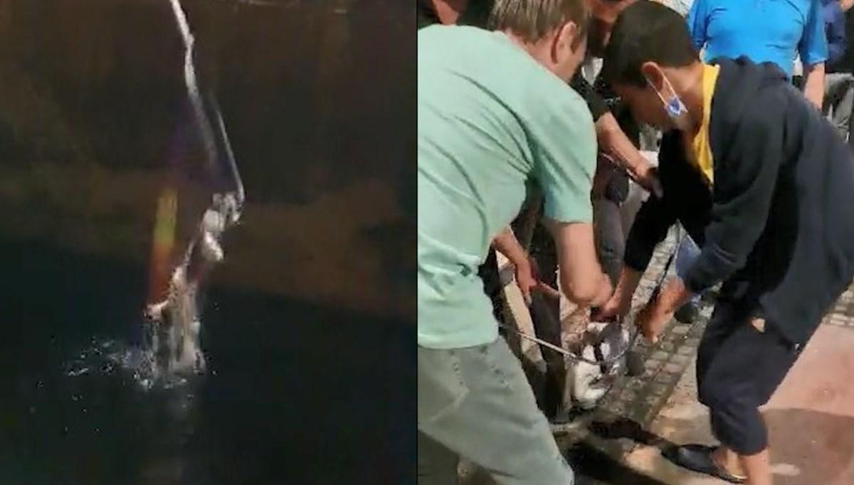 Denize düşen kediyi balık kepçesiyle kurtardılar