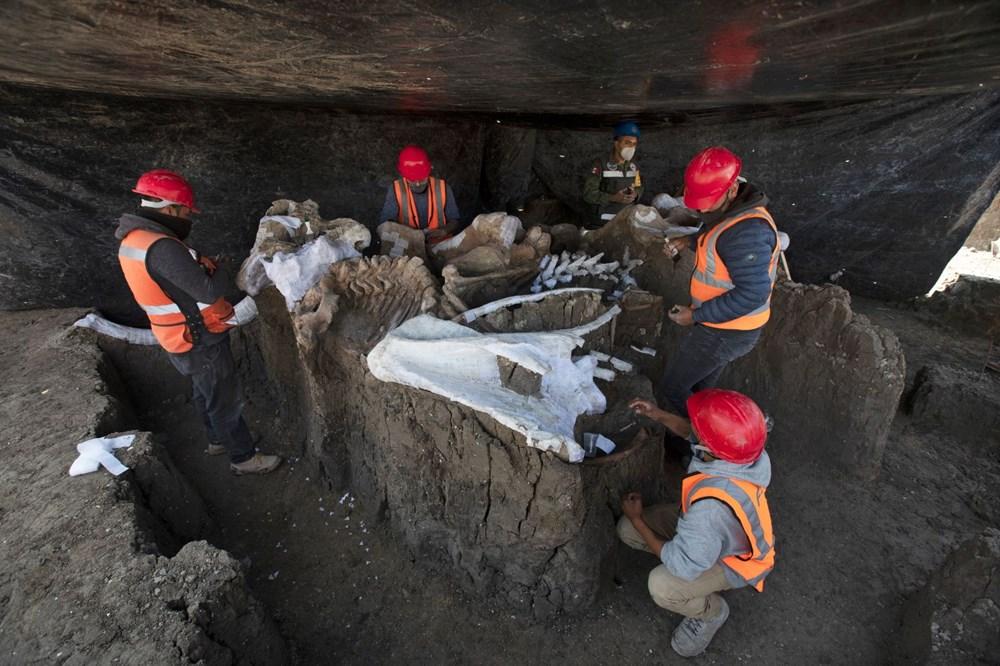 Meksika'daki sit alanında bulunan mamut fosillerinin sayısı 200'e yükseldi - 2