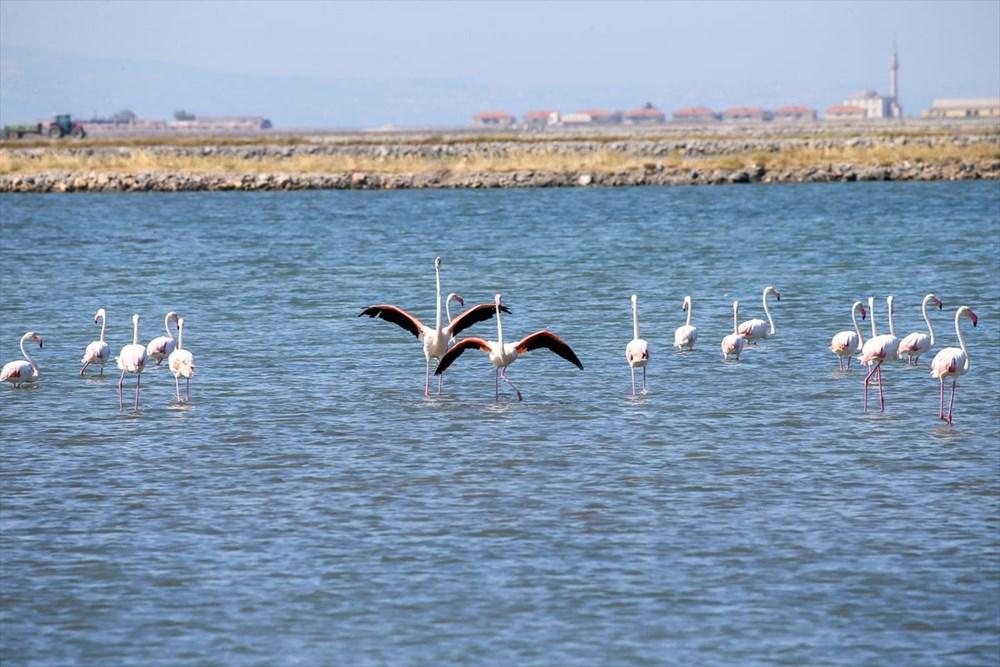 İzmir Kuş Cenneti'nde 18 bini aşkın yavru flamingo kreşte uçma hazırlığı yapıyor - 5