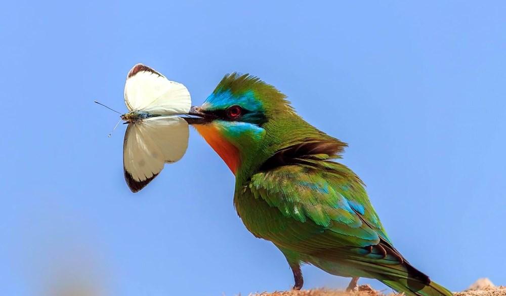 Fotoğraf tutkunu cumhuriyet savcısı 358'inci kuş türünü belgeledi - 8