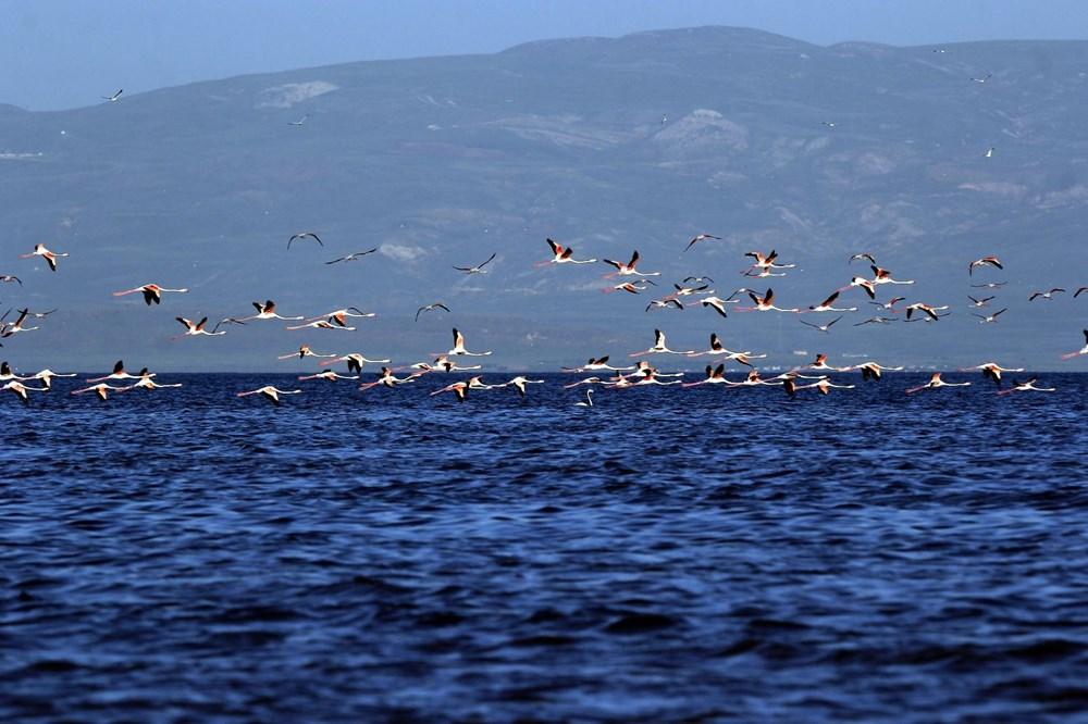Van Gölü'nde flamingo şöleni - 10