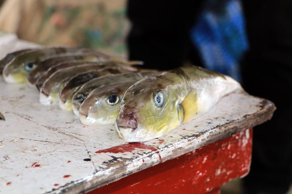 Balıkçılar balon balığının diğer türlerine de kuyruk parası istiyor - 4