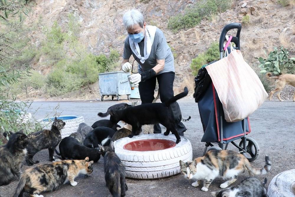 Her gün 200 sokak kedisini elleriyle besliyor - 6