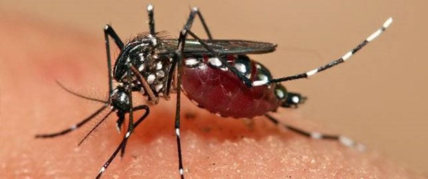 Amerika'da Zika virüsü alarmı.jpg