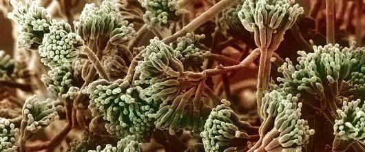 antibiyotik150515.jpg