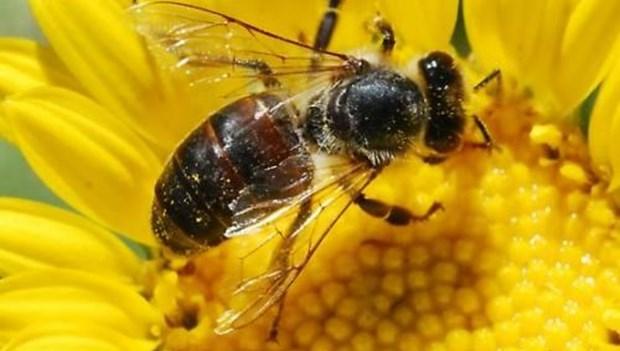 Arılar neden ölüyor.jpg