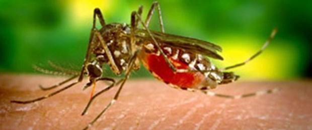 Batı Nil Virüsü belirti vermiyor